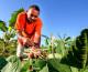 Mais de 100 famílias de agricultores são beneficiadas com concessão de uso de terras